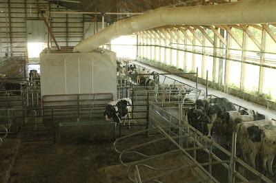 New Day Dairy, Clarksville, Iowa Robotic Freestall Barn