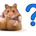 Hamsters FAQ