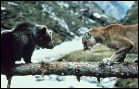 El oso (Jean-Jacques Annaud, 1988)