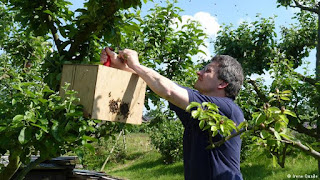 Alemania y el auge de la apicultura urbana 8