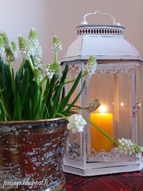 muscari ja kynttilä