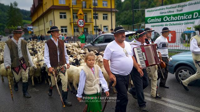Ochotnicka Watra - redyk owiec