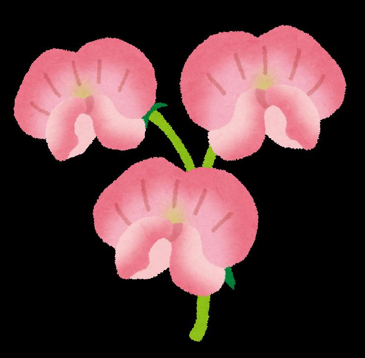 スイートピーのイラスト(花) | かわいいフリー素材集 いらすとや