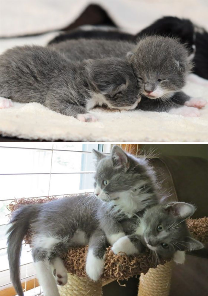 50 Heart-Warming Photos of Animals Growing Up Together - Tucker And Stewie Then And Now
