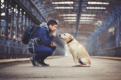 Dogteur: Comment dresser son chien soi même