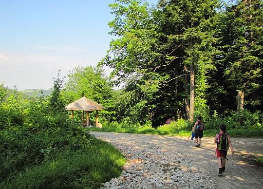 Grzbiet przed doliną potoku Flora