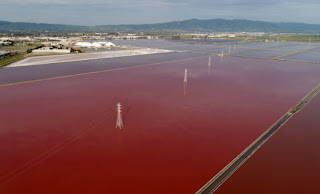 San Francisco Bay, Cargill Salt Ponds