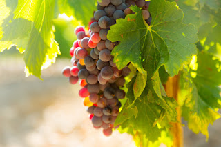 Nutrition and Benefits of Grapes Fruit for Health