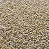 Semillas de mostaza, propiedades y beneficios