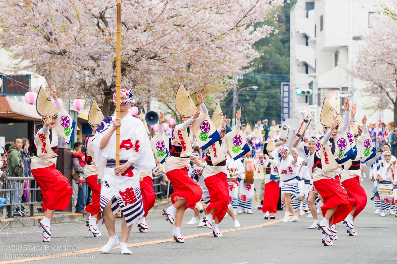 2015年 せいせき桜まつり 阿波おどり 江戸っ子連