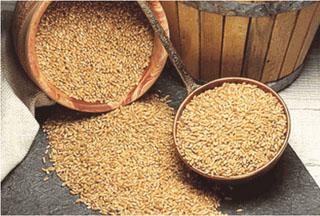 Llegará tercer embarque de 25 mil toneladas de trigo ruso el próximo 18 de junio