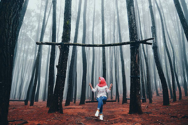 Lokasi dan Rute Hutan Pinus Mangunan: Berburu foto ditengah-tengah ketenangan