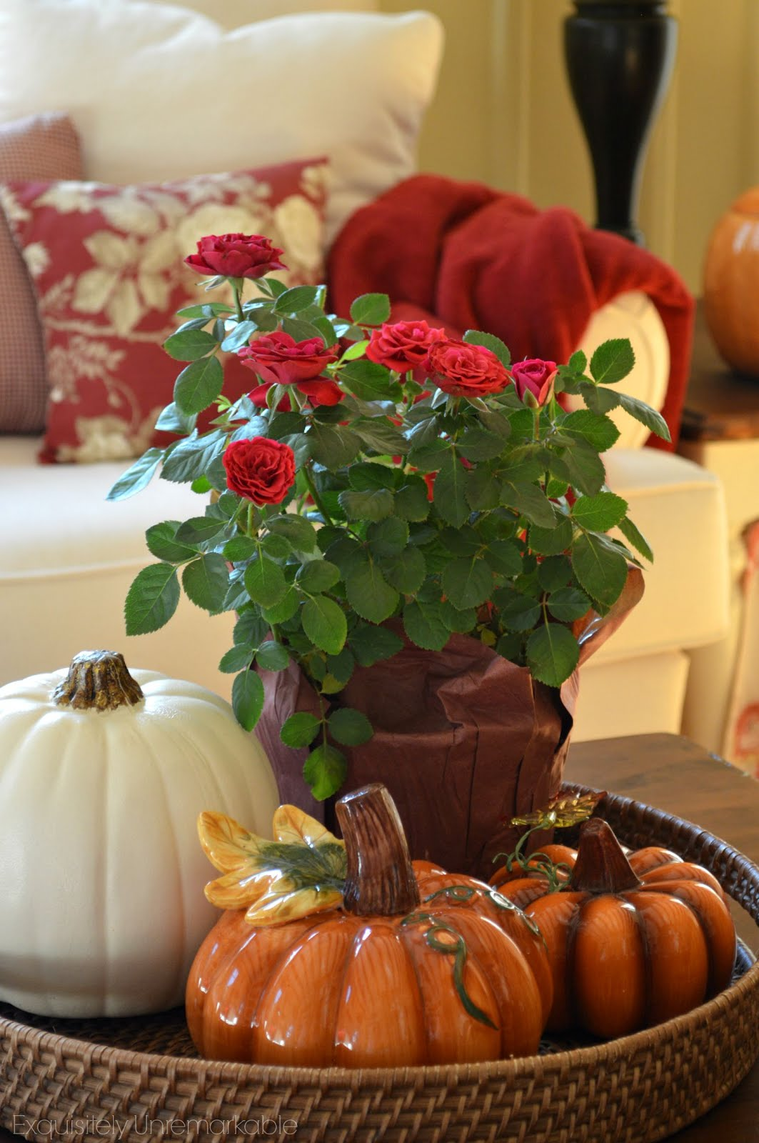 Pumpkins and red rose plant in a basket on a living coffee table