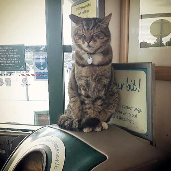 Morrison's supermarket cat Saltney
