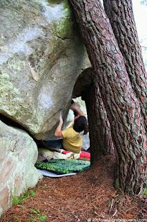 Jouant les pins, 7B, par Velentin