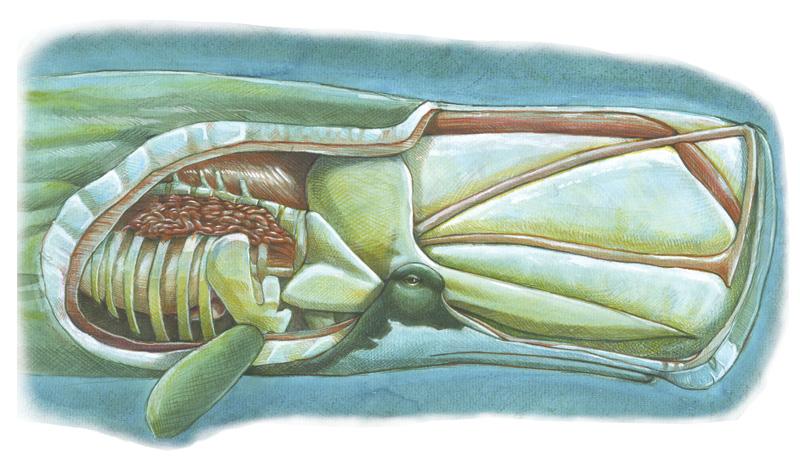 картинки внутренности кита это