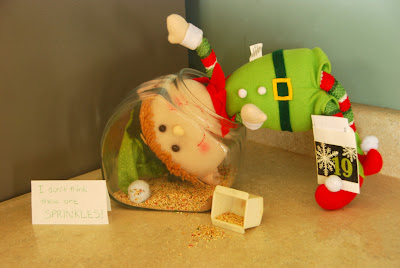 elf on the shelf advent bible study in the bird seed
