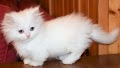 5 Cutest Cat Breeds