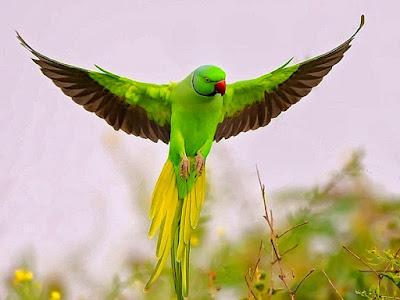 birds hd wallpapers