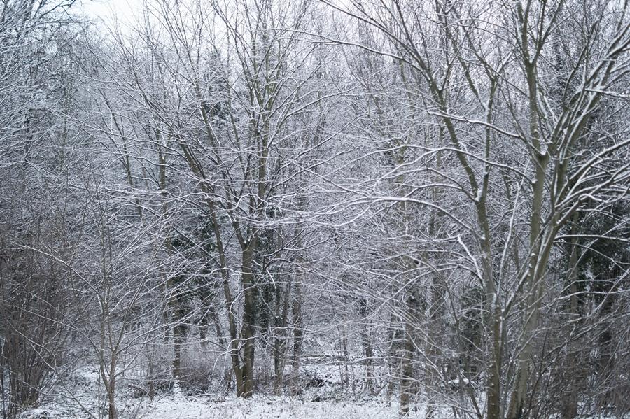 Blog + Fotografie by it's me! - Draussen - Frau Frieda sucht Schnee, verschneiter Wald