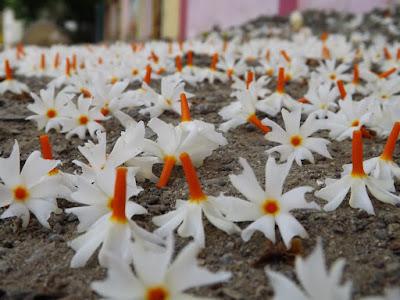 Harsingar Flowers