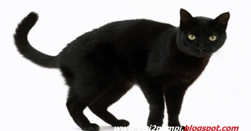 Mimpi Kucing Hitam Menurut Tafsir Islam