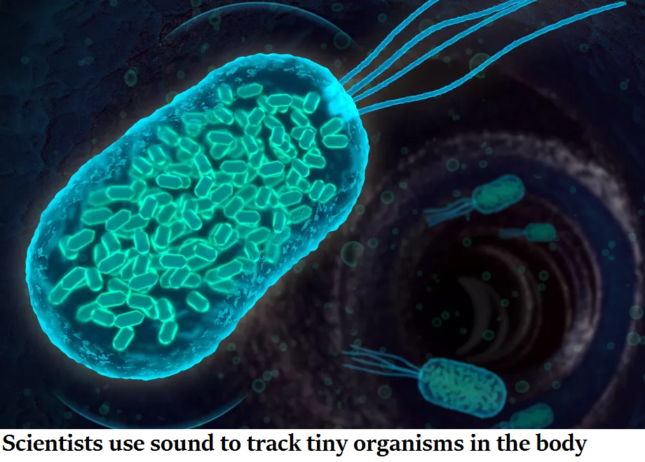 Scientists use sound to track tiny organisms in the body