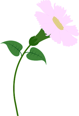 Chrisant Flower Vector , Flowers Vector, Flowers PNG, Fowers in Ai File