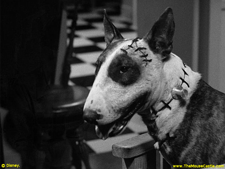 Disney News And Interviews From The Mouse Castle A First Look At Tim Burton S New Frankenweenie