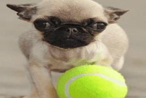 Neşeli-Köpekler