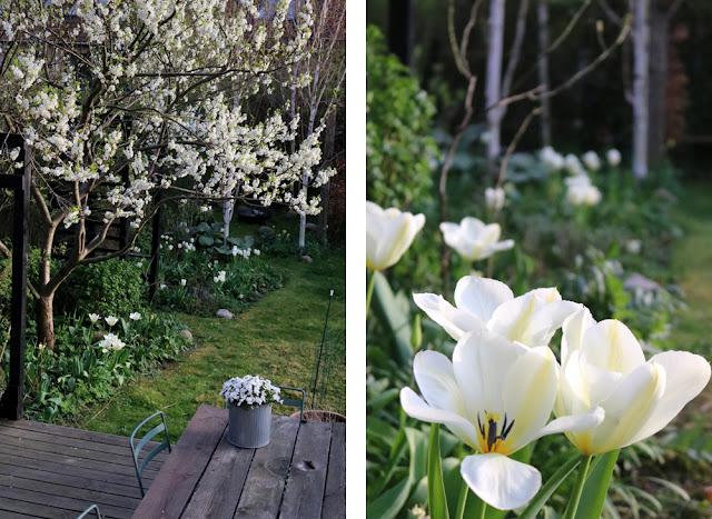 Forår i haven hos Plantebegejstring