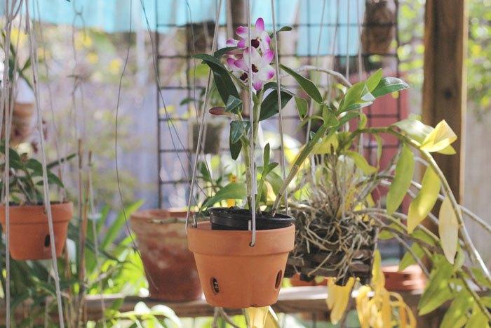 Как ухаживать за орхидеей дома: выращиваем капризный цветок правильно