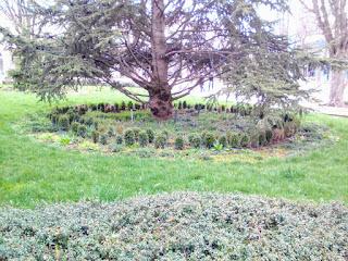 Mini Garden, Yambol, Tree, Municipal Offices, Unobserved,
