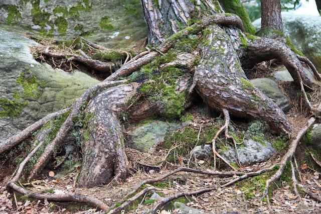Ligoté, Rocher Canon, Fontainebleau