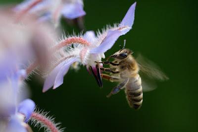 En España impulsan una ruta de la miel valenciana para mantener vivo el sector.