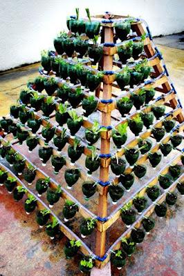 bertani sayur-mayur memanfaatkan botol bekas secara vertikultur