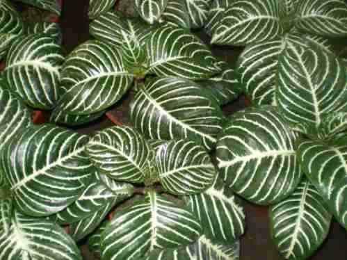 Plantas del mundo - Fotos plantas de interior ...