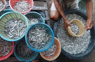 cara memasak ikan teri sambal ijo,cara memasak ikan teri nasi,cara memasak ikan teri asin,cara memasak ikan teri yang enak,cara memasak ikan teri basah untuk bayi,cara memasak ikan teri kering,