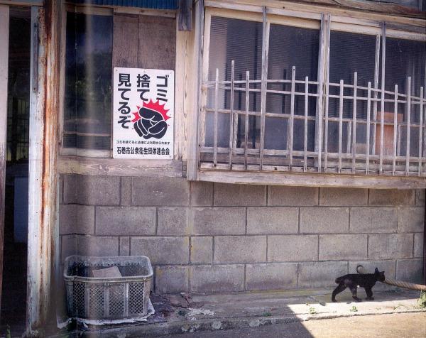 tashirojima cats