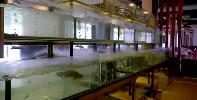 Xây hồ nuôi hải sản chuyên nghiệp đúng chuẩn Tp HCM
