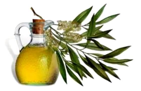 Cara menggunakan minyak pohon teh untuk menghentikan rambut rontok dan meningkatkan pertumbuhan rambut