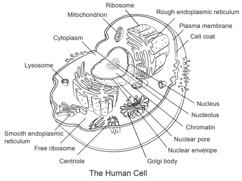 The science of cell