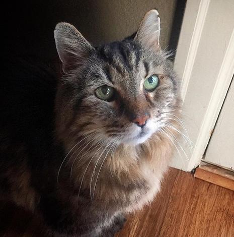 Пропал старейший кот в мире