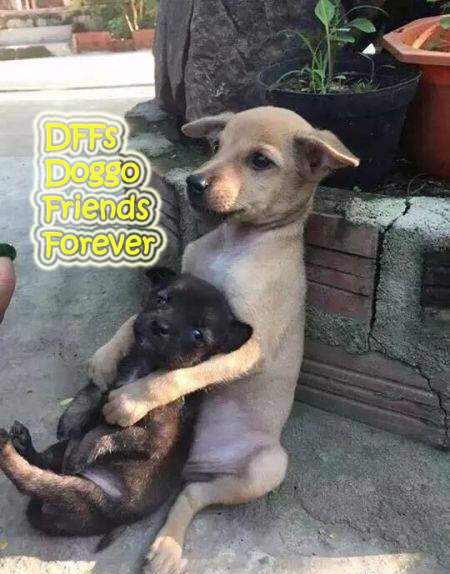 DFF - Doggo Friends Forever