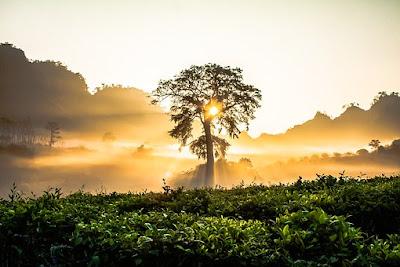 Descubren 381 nuevas especies en la Amazonia