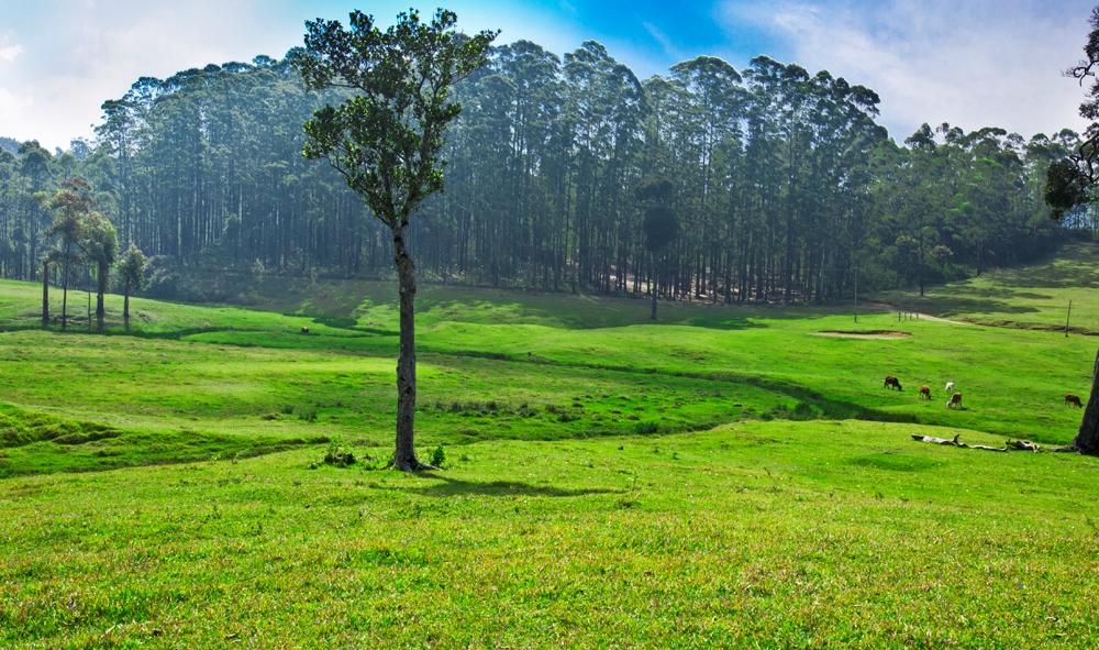 Image result for manjolai estate images photos