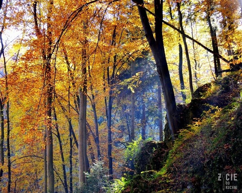 pazdziernik, las, pazdziernik sezonowe warzywa, sezonowe owoce, zycie od kuchni, jesien przepisy sezonowe