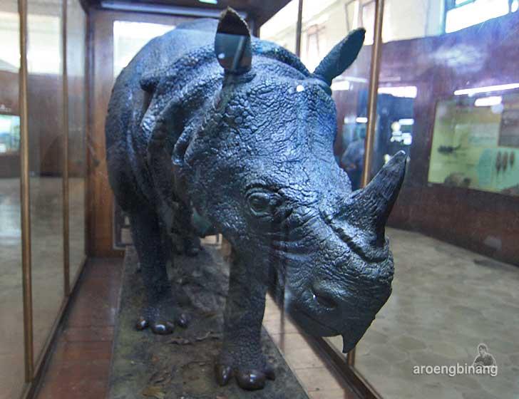badak museum zoologi bogor