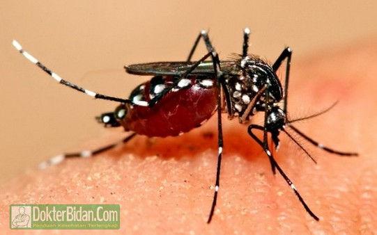 Chikungunya - Penyebab, Gejala, Pencegahan dan Obat Yang Ampuh Secara Alami Cepat Dan Medis Apotik