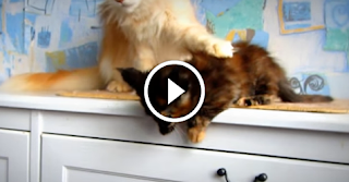 Kitten Is About To Jump, But Protective Cat Mom Has Stern Words Of Instruction